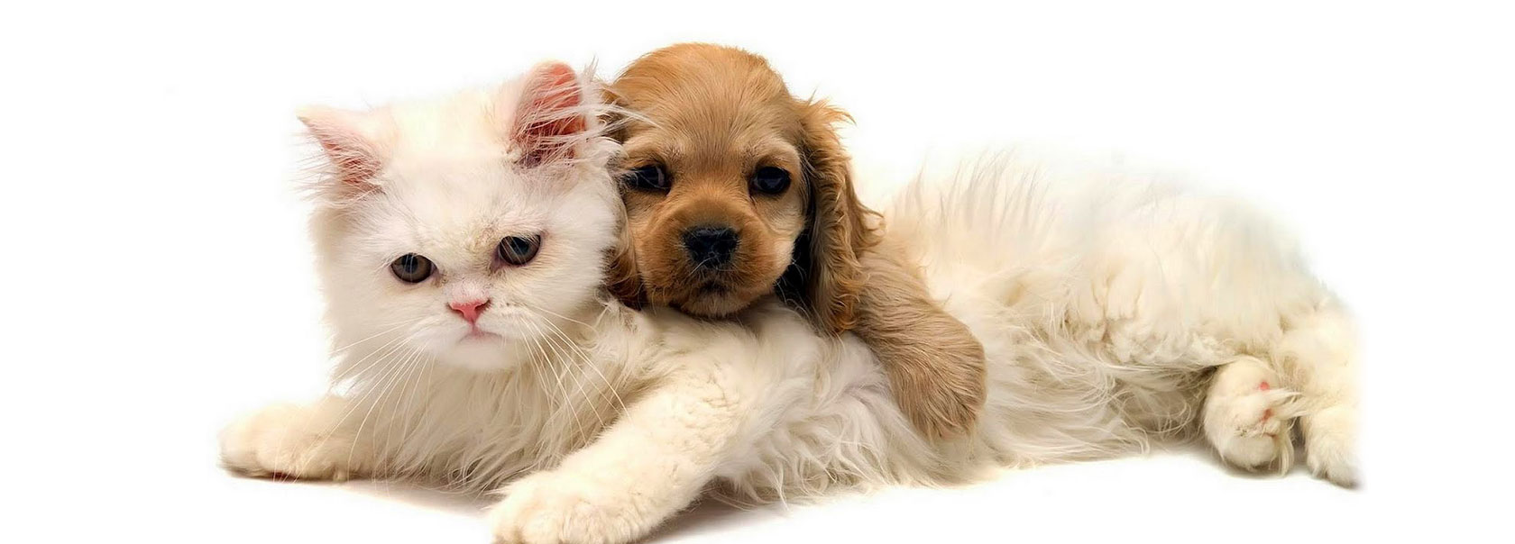 Kediden Huzur Köpekten Merhamet